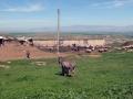 Das Plateau im Nordosten Syriens grenzt direkt an die Türkei. Rechts im Bild ist der Fluss Tigris zu sehen, dort treffen die Türkei, der Irak und Syrien aufeinander (Foto: Loesche)